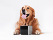 ukrainian startups, successful kickstarter campaigns, crowdfunding for startups. petcube on kickstarter